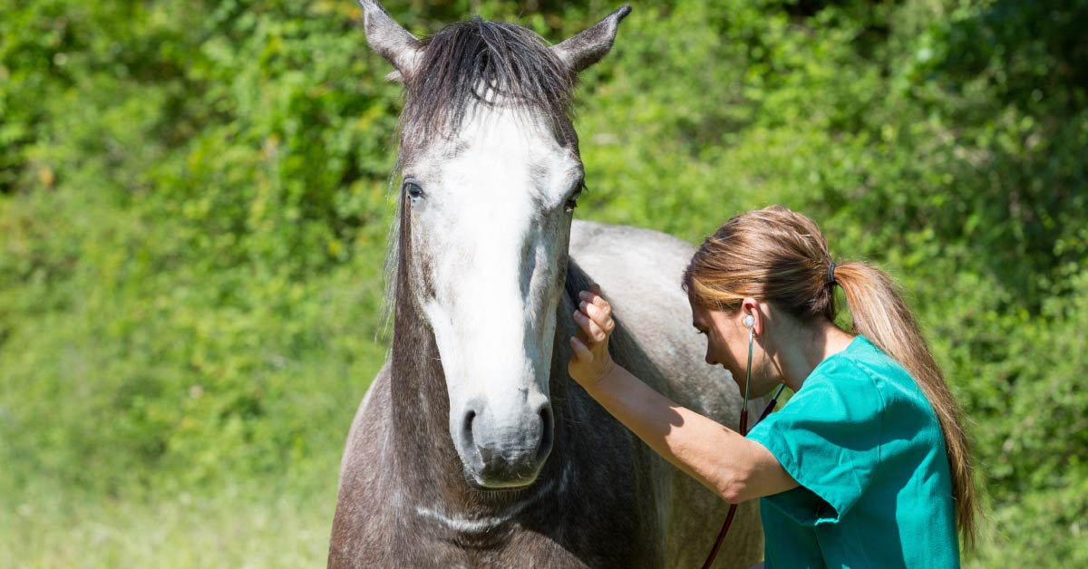 Liver Disorder in Horses