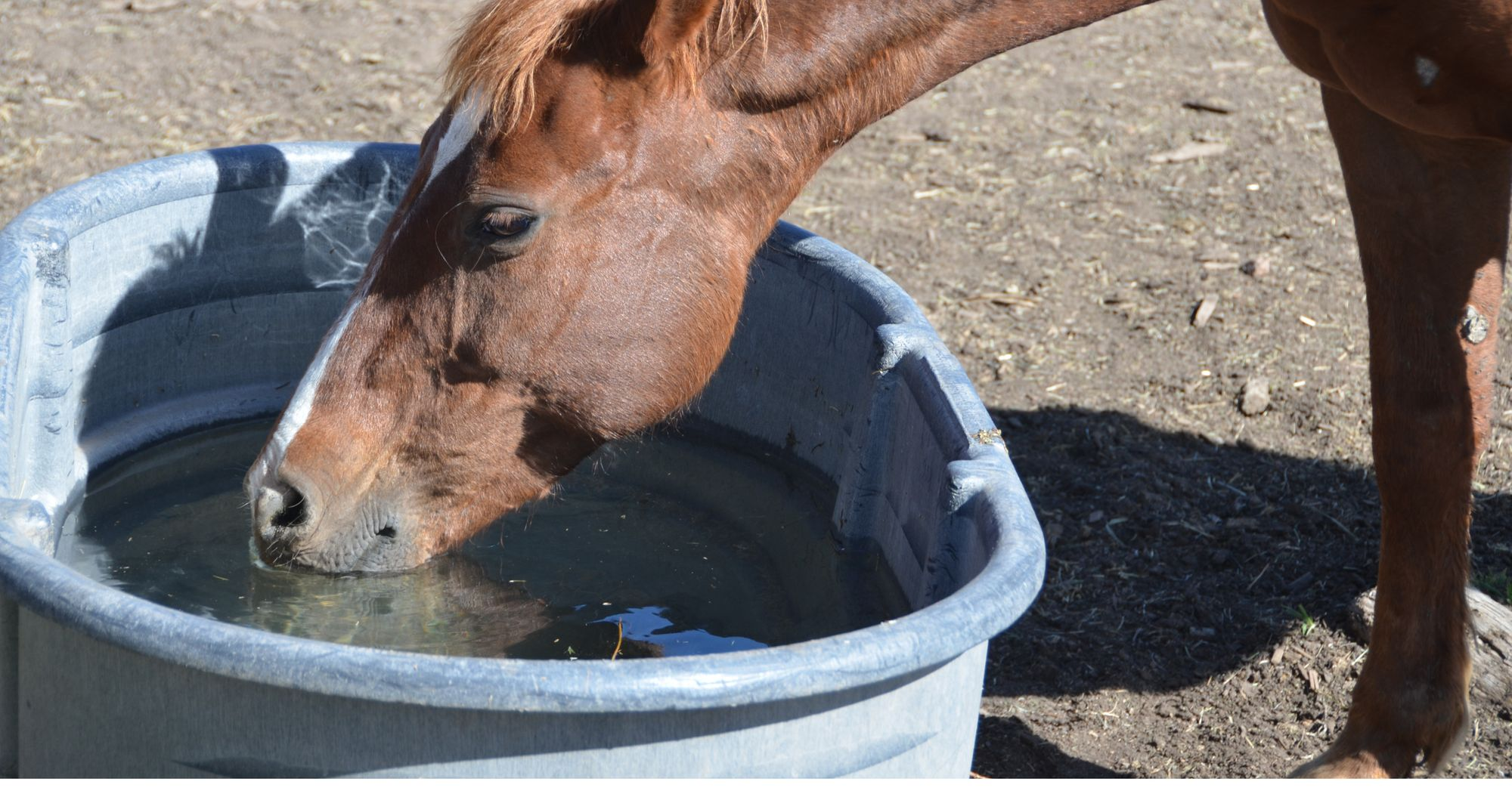Water Intake For Horses In Winter