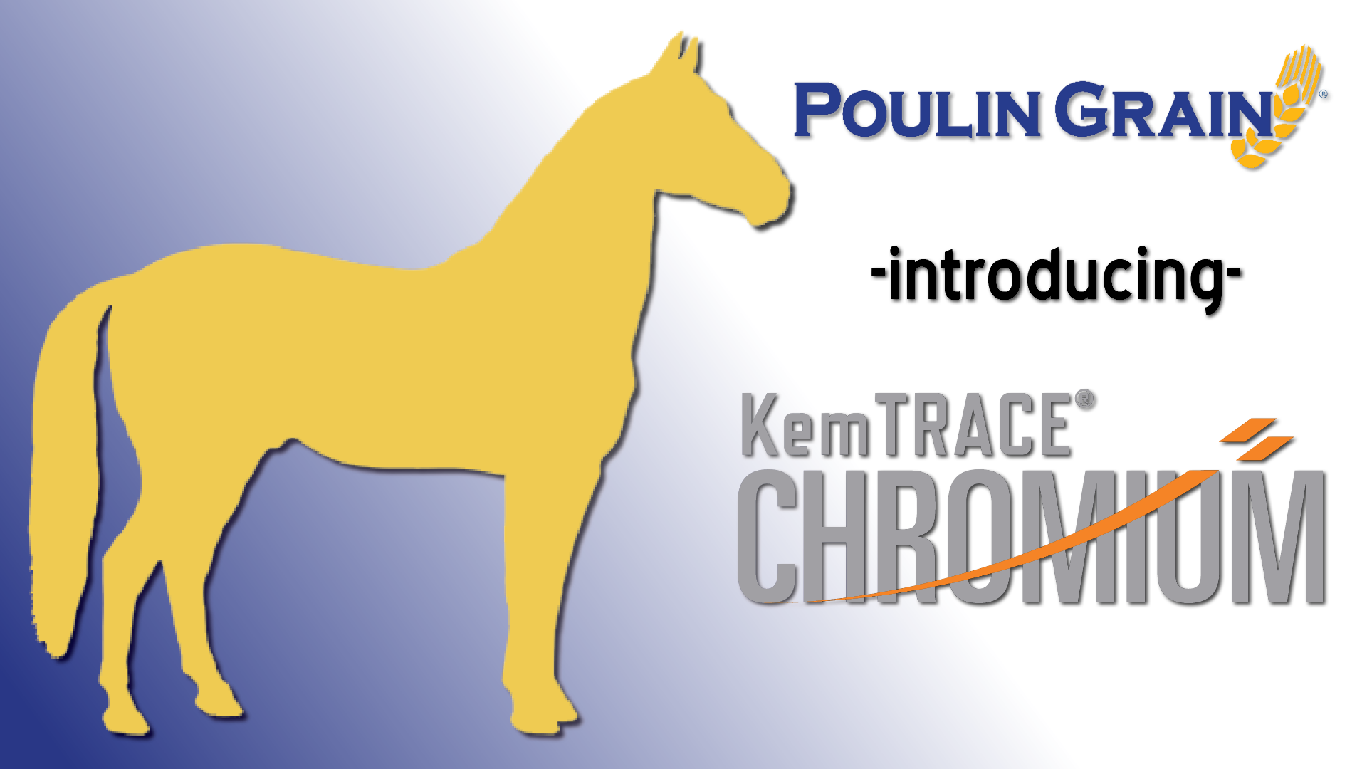 KemTRACE® Chromium for Horses: Webinar Recording