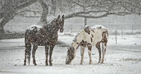 Feeding Horses in Cold Temperatures