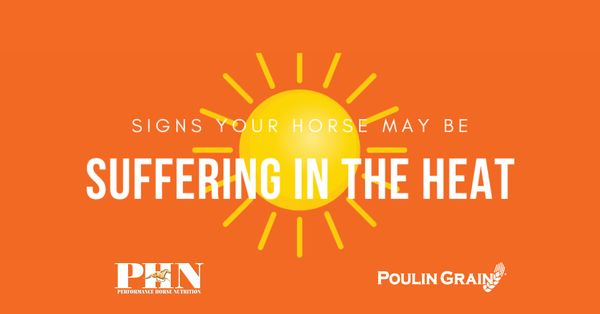 Signs Your Horse May Be Suffering in the Heat